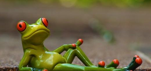 frog-947770_640